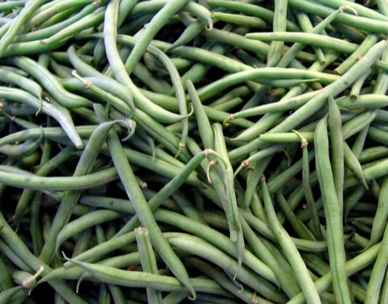 Pods of Green Bean plants