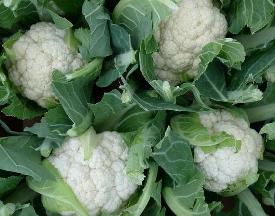 Growing Cauliflower