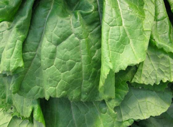 leaves of Mustard greens