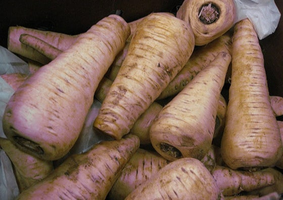 advice on growing Parsnips in your garden