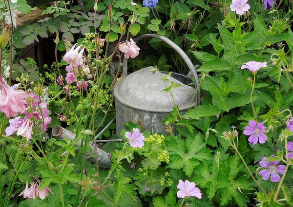 Joys of Gardening