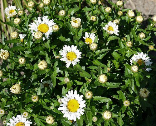 Low maintenance plants easy care plants for the garden for Easy care garden plants