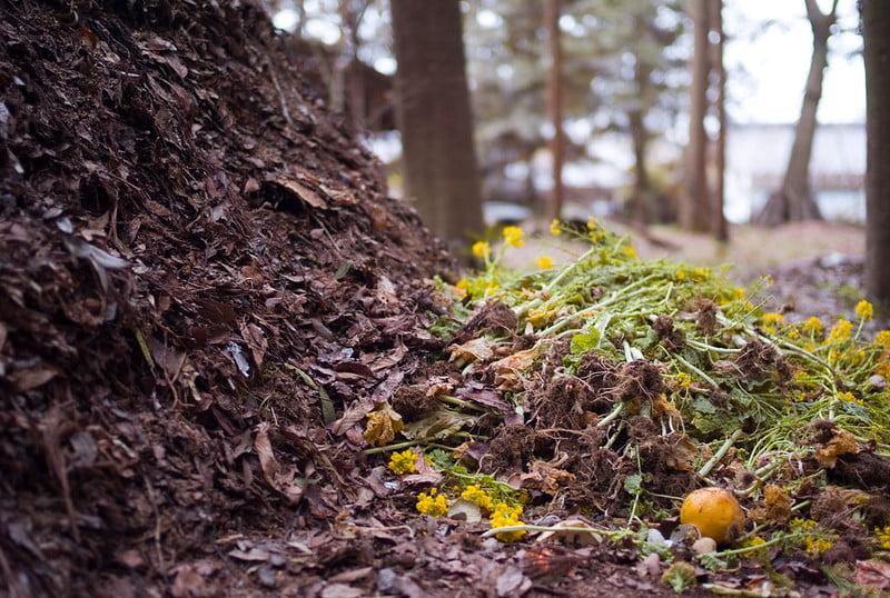 Fresh Compost Pile
