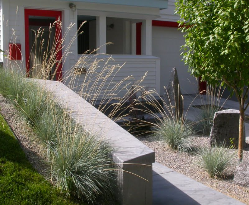 Blue Oat Grass used in a pathway border.